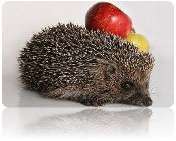 Готовим моченые яблоки